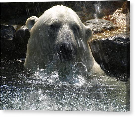 Polar Bear 3 Canvas Print