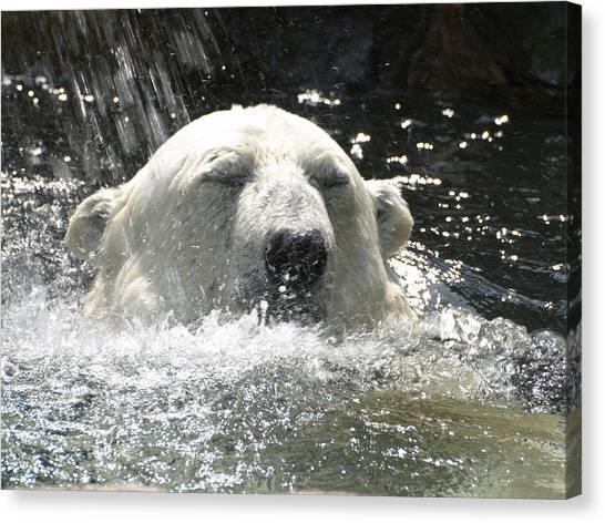 Polar Bear 4 Canvas Print