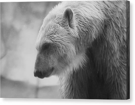 Polar Bear 7 Canvas Print