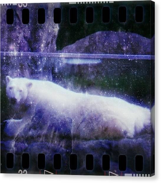 Bears Canvas Print - #polar #bear #habitat #nature #zoo by Luke R