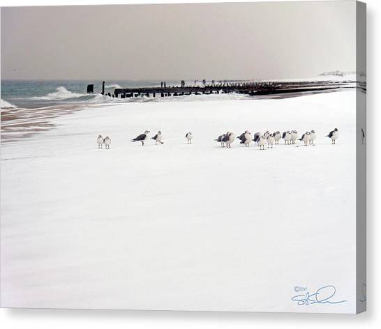 Polar Bird Club Canvas Print