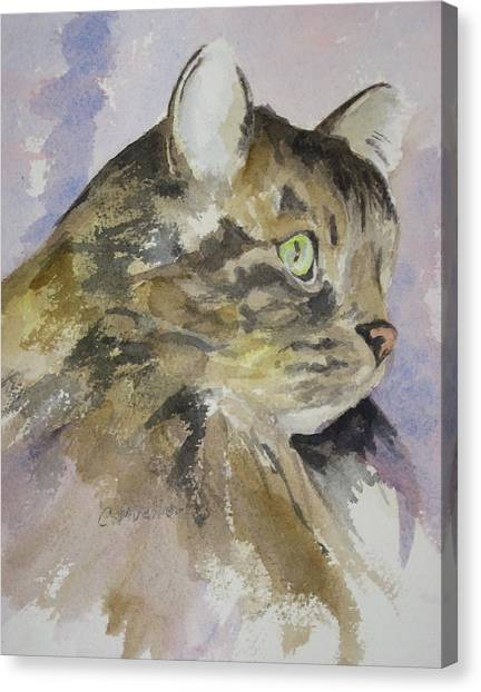 Main Coons Canvas Print - Pollux by Carol Mueller