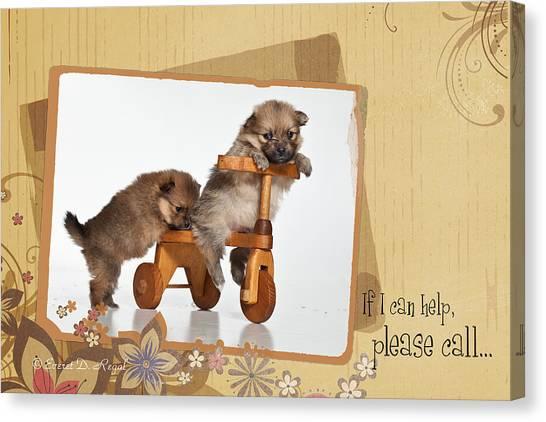 Pomeranians Canvas Print - Pomeranian 1 by Everet Regal