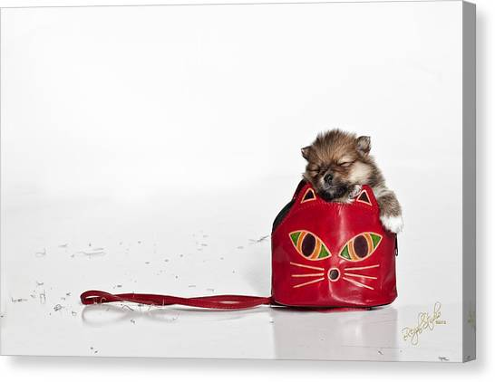 Pomeranian Canvas Print - Pomeranian 2 by Everet Regal