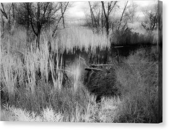 Pond Canvas Print