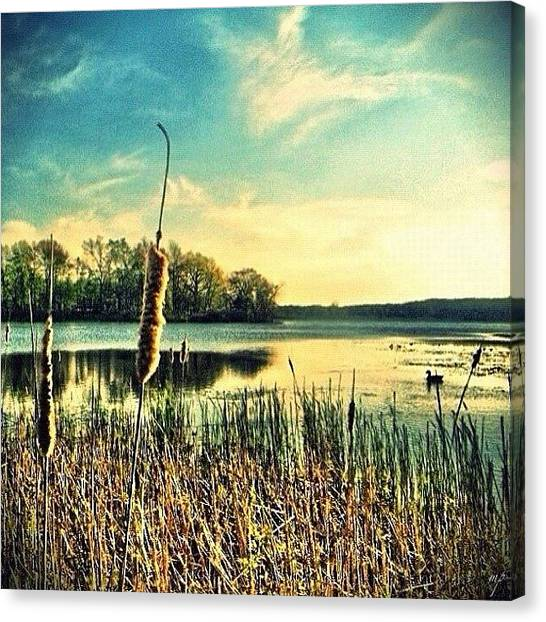 Ponds Canvas Print - Pond Of Gold by Maury Page