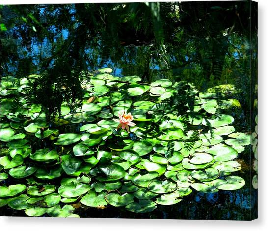 Pond With With Pond Lilly Canvas Print by David Killian