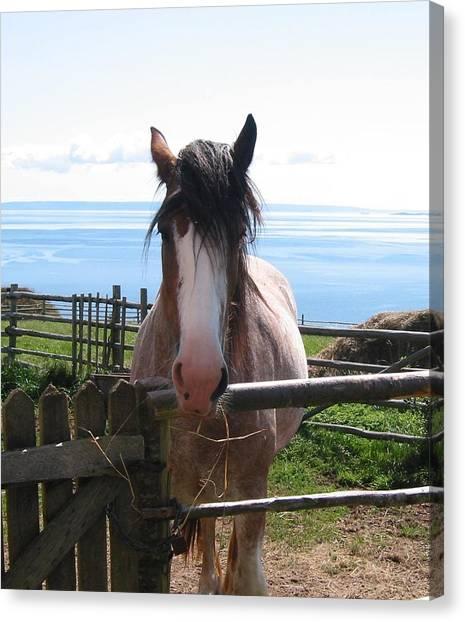 Pony At Highland Village Canvas Print