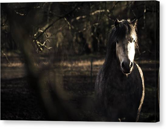 Pony In The Brambles Canvas Print