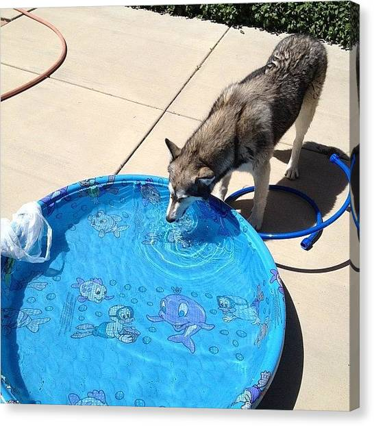 Wolves Canvas Print - Poolside Pup 2 by Doug Smeath