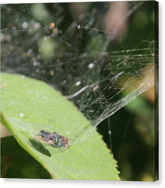 Spider Web Canvas Print - Poor Guy Didn't Stand A Chance #fly by Saul Jesse Beas
