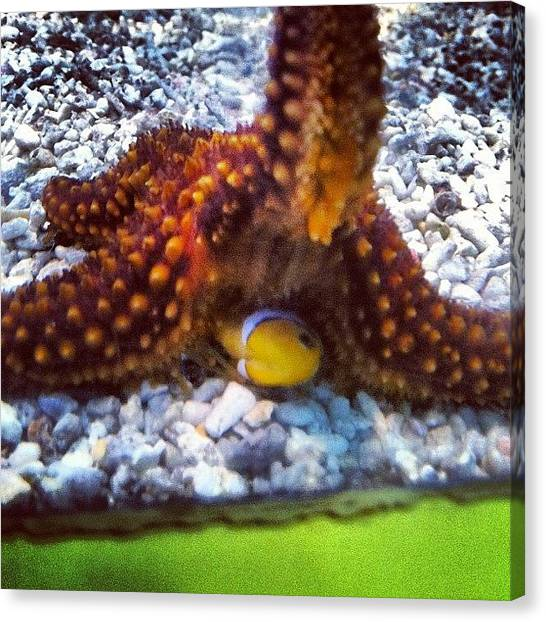Tanks Canvas Print - Poor Little Fish ! #starfish #killing by S Smithee
