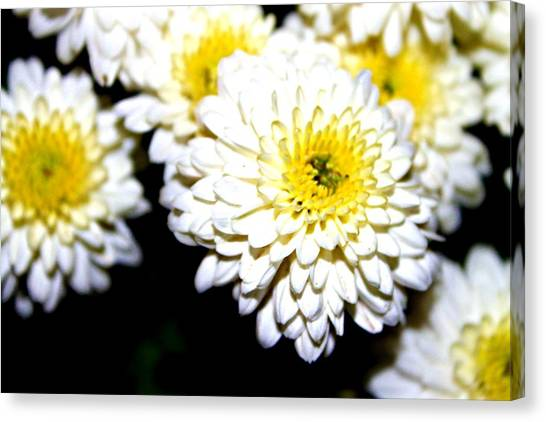 Popcorn Flowers Canvas Print by Hannah Miller