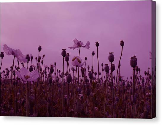 Poppies In France Canvas Print by Jenny Potter