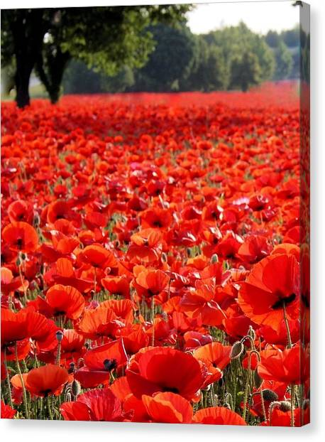 Gaston County Canvas Print - Poppies  by Tammy Cantrell