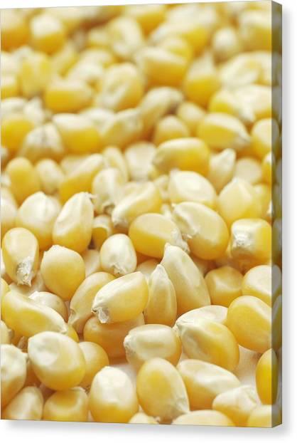Indian Corn Canvas Print - Popping Corn by Jon Stokes