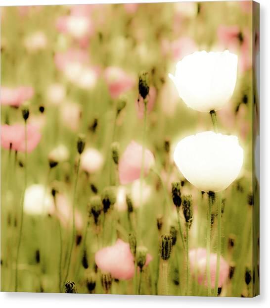 Poppy Fields Canvas Print by Luigi Masella