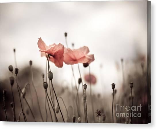 Botanical Garden Canvas Print - Poppy Flowers 03 by Nailia Schwarz