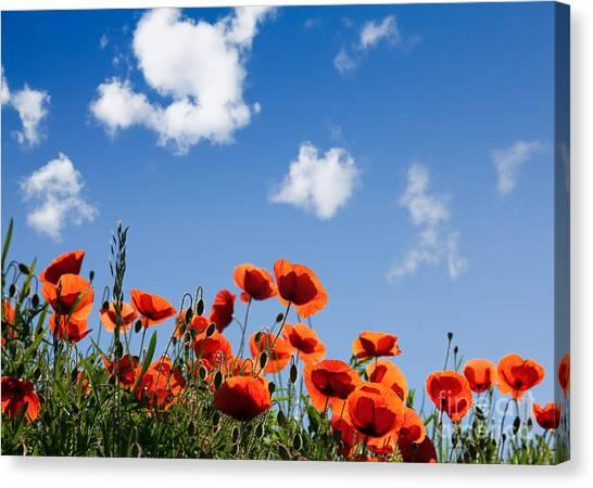 Botanical Garden Canvas Print - Poppy Flowers 05 by Nailia Schwarz