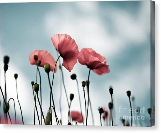 Botanical Garden Canvas Print - Poppy Flowers 07 by Nailia Schwarz