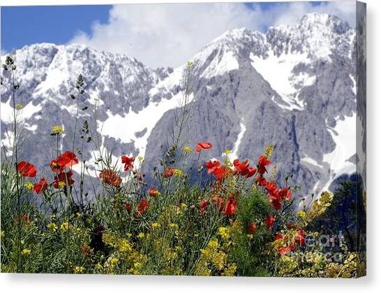 Poppy Flowers Under The Mountains Canvas Print