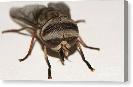 Portrait Of A Fly Canvas Print