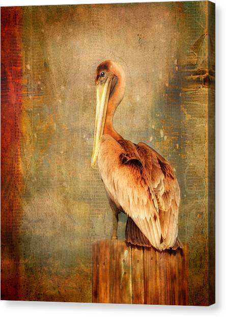 Portrait Of A Pelican Canvas Print