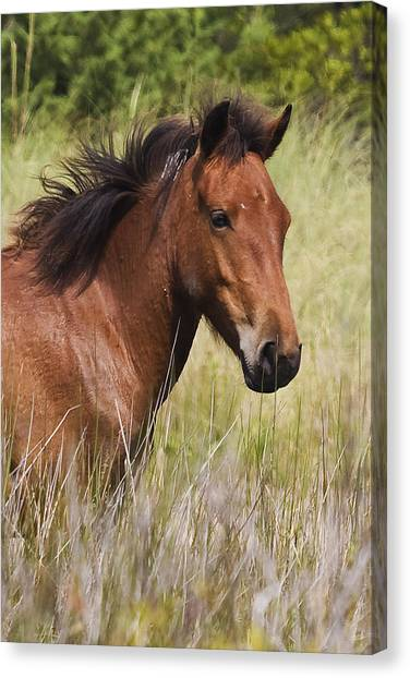 Portrait Of A Spanish Mustang Canvas Print