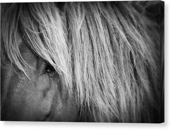 Portrait Of A Wild Horse Canvas Print