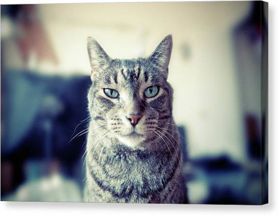 Cat Canvas Print - Portrait Of Cat by William Andrew