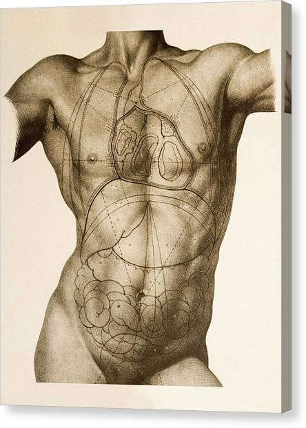 Anatomical Position Canvas Prints Page 4 Of 4 Fine Art America