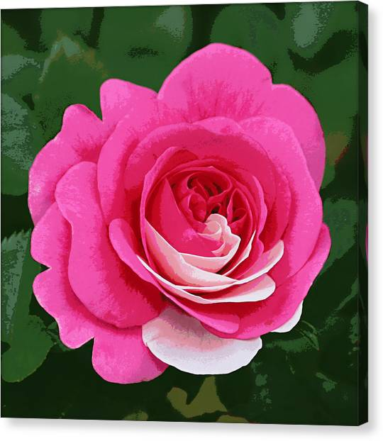 Poster Rose Canvas Print by Jim Speirs