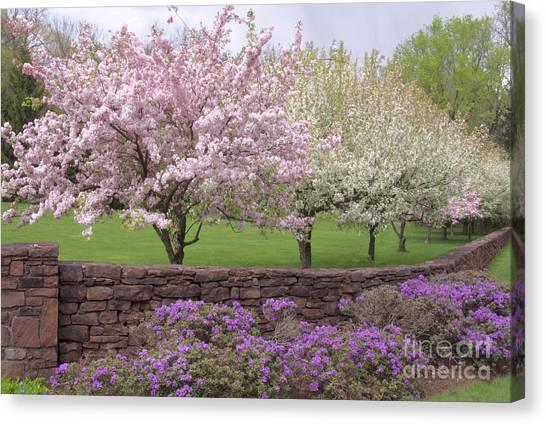 Powder Hill Blossoms Canvas Print