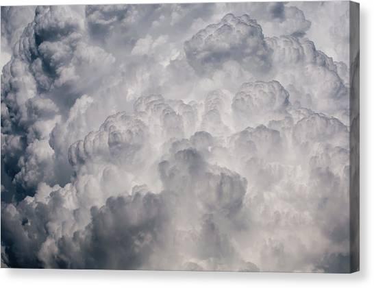 Powder Puff Canvas Print