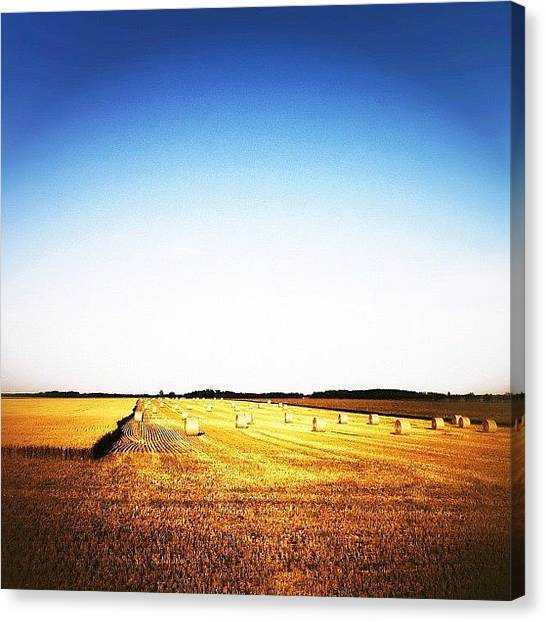 Manitoba Canvas Print - Prairie by Jessica Mutimer