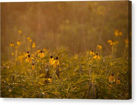 Prairie Sunrises Canvas Print - Prairie Wildflowers by Steve Gadomski