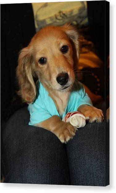 Precious Puppy Canvas Print