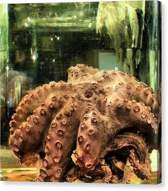 Octopus Canvas Print - #preserved #glass #jar #octopus #witte by Clifford McClure