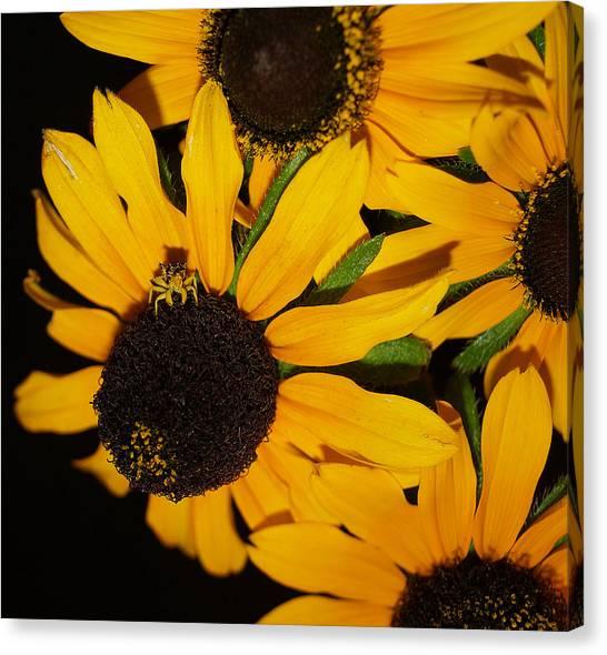Pretend I'm A Flower Canvas Print by Irma BACKELANT GALLERIES