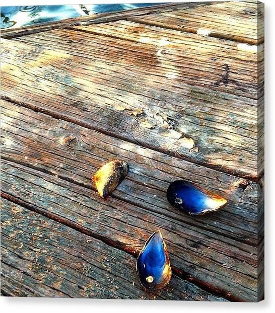 Seashells Canvas Print - Prettiest #mussels I've Ever Seen! by Debi Tenney