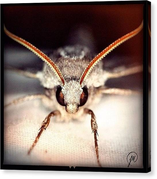 Georgia Canvas Print - Pretty Fierce Looking Hawk Moth by Jenna Malloway