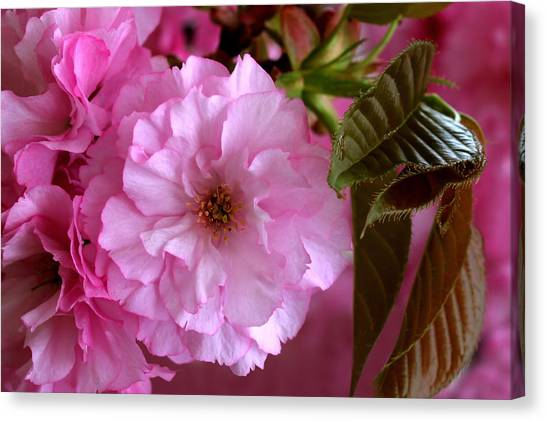Pretty In Pink Blossom Canvas Print