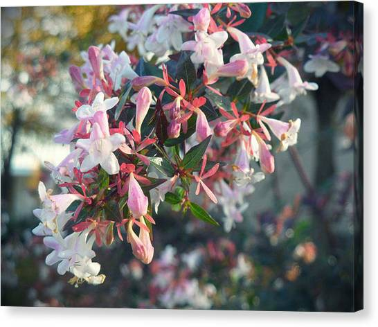 Pretty In Pink Canvas Print by Lee Yang