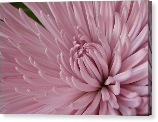 Pretty In Purple 2 Canvas Print