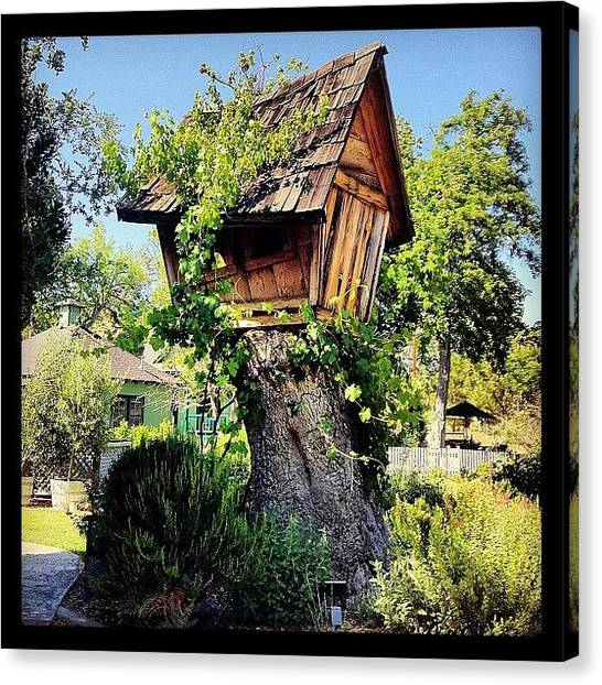 Vineyard Canvas Print - Pretty Much My #dreamhome. #tree by Caitlin Schmitt