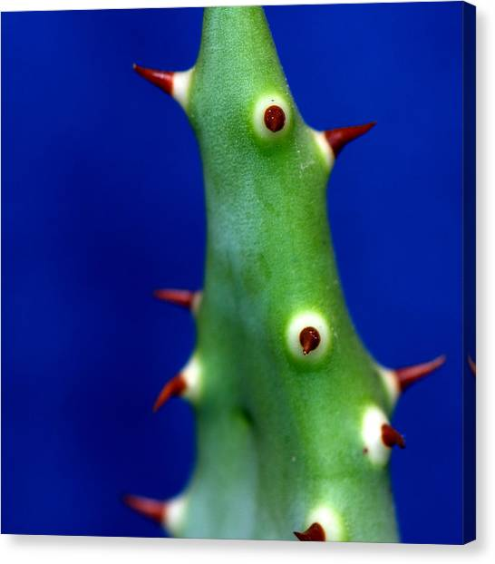 Prickles Canvas Print