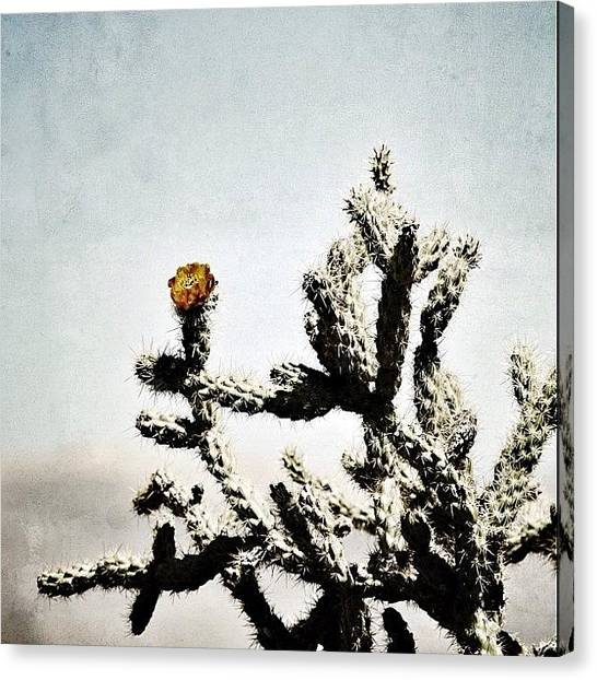 Pears Canvas Print - Prickly Bloom by S Michelle Reese