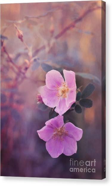 Yukon Canvas Print - Prickly Rose by Priska Wettstein