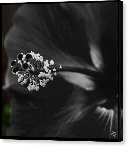Projection In Black And Whiite Canvas Print