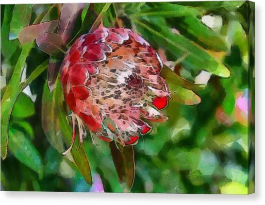 Protea Canvas Print
